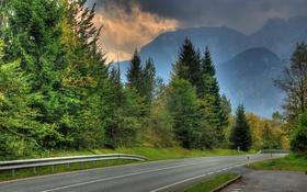 Обои дорога, природа, фото, ель, Австрия, Salzburg