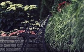 Картинка скамейка, трава, лавка, боке
