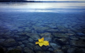 Обои природа, лист, озеро