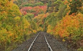 Картинка дорога, осень, лес, деревья, природа, рельсы, склон