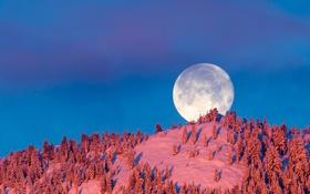 Обои зима, небо, луна