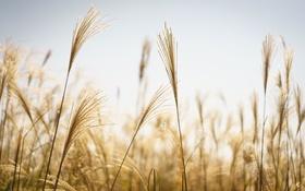 Обои небо, трава, стебли, боке