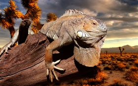 Обои rock, desert, iguana, flakes