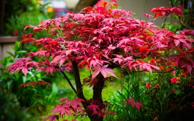 Обои листья, дерево, краски, клен