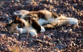 Обои кот, котяра, камушки, кошак, лежит