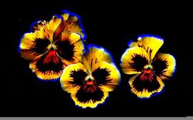 Обои лепестки, фон, цветы