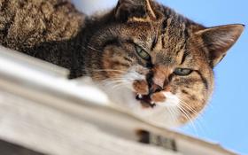Обои кот, глаза, кошак, взгляд, усы