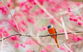 Обои ветки, природа, птица, сад