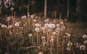 Обои поле, цветок, трава, макро, цветы, поляна, растение