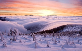 Обои зима, лес, снег, облаков, море