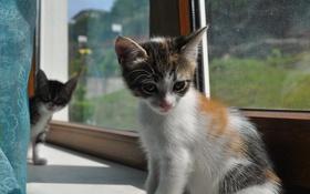 Обои котёнок, глаза, подоконник, взгляд