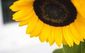 Обои цветок, подсолнух, желтые, лепестки