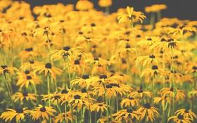 Картинка цветы, стебли, лепестки, поле цветов
