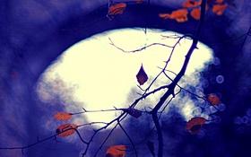 Обои природа, фон, осень, листья, цвет