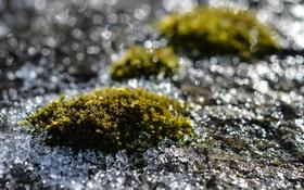 Обои лед, макро, блики, блеск, мох, льдинки