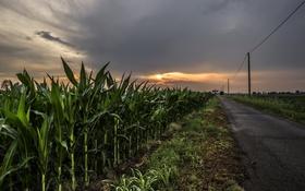 Картинка дорога, ночь, кукуруза