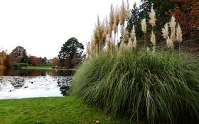 Обои трава, деревья, пруд, парк, камыши, замок, берег