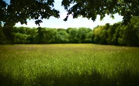 Обои поле, трава, дерево, тень, солнечно, боке