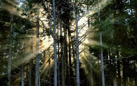 Обои природа, лес, осень, свет, туман