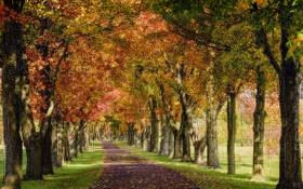 Обои осень, парк, деревья