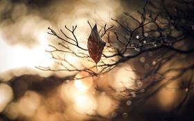Обои природа, лист, ветка