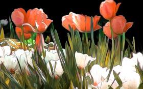 Обои линии, абстракция, рендеринг, краски, тюльпаны