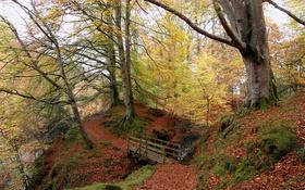 Картинка осень, лес, деревья, мост