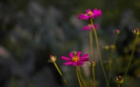Картинка цветок, трава, макро