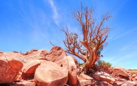 Обои небо, камни, дерево, пустыня