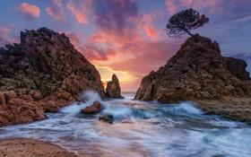 Картинка море, волны, закат, дерево, скалы