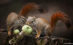Обои лес, природа, грибы, еда, forest, animals, nature