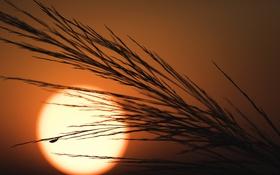 Обои солнце, природа, закат, растение