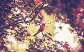 Обои листья, дерево, ветви, птица