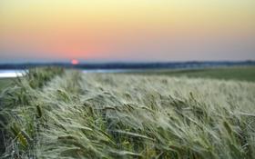 Картинка природа, поле, рассвет