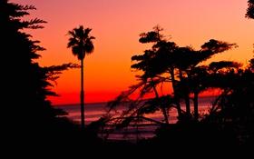 Картинка море, небо, деревья, закат, пальма, горизонт, силуэт