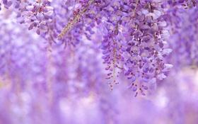Картинка природа, лепестки, соцветие
