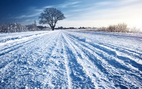 Обои солнечно, дерево, снег, зима, дорога, трава