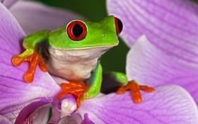 Обои цветок, глаза, растение, лягушка