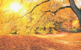 Обои солнце, деревья, парк, осень, листья