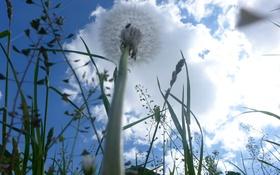 Обои одуванчик, макро, облака, трава, небо