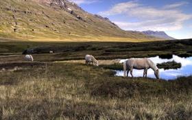 Картинка природа, кони, озеро