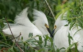 Обои природа, птица, перья, клюв