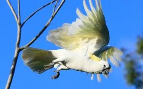 Обои птица, крылья, полет, клюв, попугай