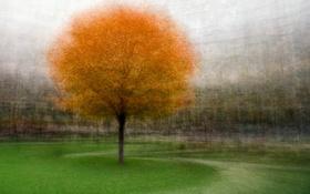 Обои осень, трава, дерево, тропинка