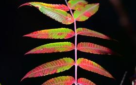 Обои ветка, листья, осень