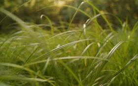 Обои трава, макро, размытие