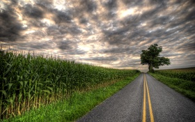 Обои дерево, поля, тучи, плантации, пасмурно, дорога, шоссе