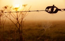Картинка свет, забор, паутина, утро