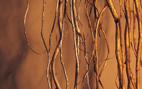 Картинка nature, Brown, roots. tree