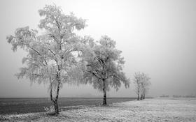 Обои зима, поле, снег, деревья, фото